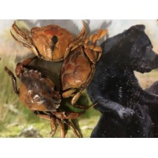 Keetjes- Krabbetjes